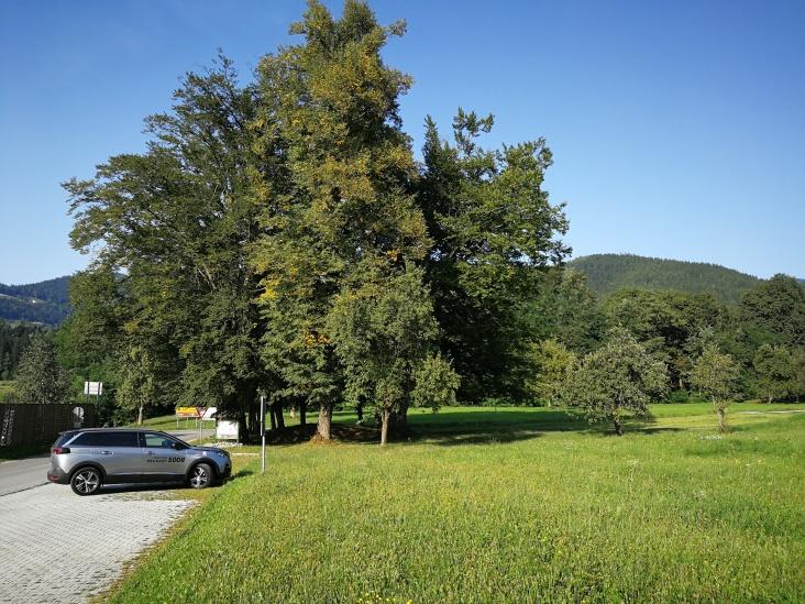 V LEGNU (občina Slovenj Gradec)