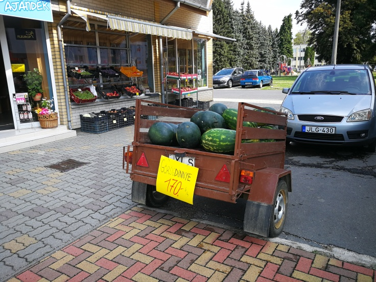 Lubenice in buče (watermelnons and pumpkins)