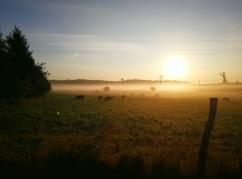 Jutranja paša
